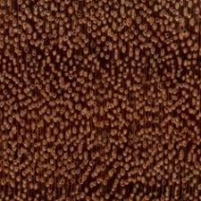argentine osage orange endgrain 10x wood types species