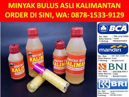 Minyak Bulus Asli Papua 0878 1533 9129 wa xl minyak bulus papua daily beli