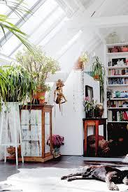 living room indoor plants pots living room transitional design
