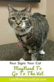 the 25 best cat symptoms ideas on pinterest cat health emt