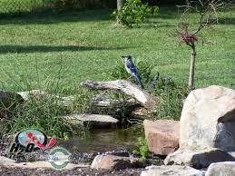 birds frogs u0026 other backyard wildlife lexington kentucky ky