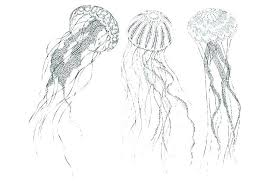 free coloring pages jellyfish jellyfish coloring page jellyfish coloring pages jellyfish coloring