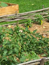 Mulching Vegetable Garden by How To Choose Mulch For Your Landscape Tab Property Enhancement
