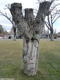 tree face avenue of faces weird california