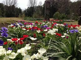 cut flower garden u2013 moore farms botanical garden