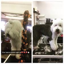 paws u0026 claws pet resort u0026 grooming home facebook