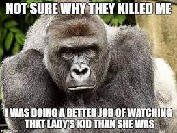 Go Away Meme - the cincinnati zoo wants harambe memes to go away maxim