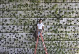 human flower project can u0027t keep an artist gardener down