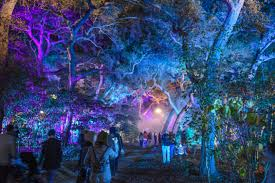 enchanted forest of light tickets descanso gardens enchanted forest of light 2017 sirens scoundrels