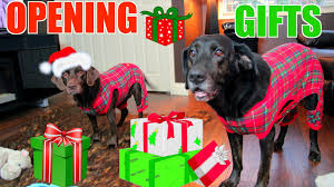 dogs opening christmas presents in onesies youtube