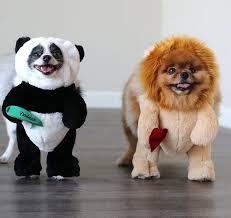 pet costumes pandaloon panda pet costumes apparel and accessories shark tank
