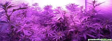 led marijuana grow lights which led grow lights are best for growing cannabis grow weed easy