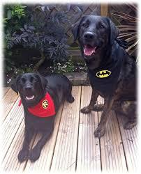 Batman Robin Dog Halloween Costumes Pawed Crusader Red Robin Dog Cat Bandana