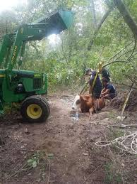rancher logging photos tx firefighters work for 5 days to save cows stuck in mud