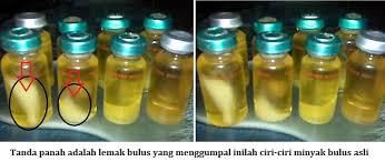 Minyak Bulus Asli Papua titan gel beli minyak lintah yang asli dan kaya manfaat khasiat