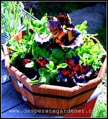 Vegetables For Container Gardening by Desperate Gardener Easy Container Gardening Combining Herbs And