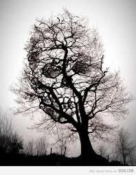 skull tree creepypasta your meme