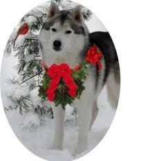 siberian husky siberian husky ornament puppy