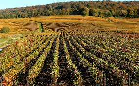 what is harvest thanksgiving 6 ways to celebrate the champagne harvest this fall travel leisure