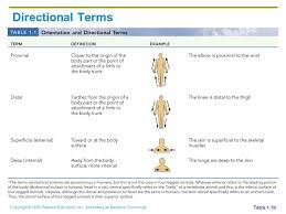Directional Terms Human Anatomy The Human Body An Orientation Ppt Download