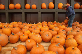 Pumpkin Picking Places In South Jersey by 2017 Guide To Philadelphia Area Pumpkin Patches Today U0027s 96 5