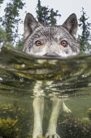 25 best national geographic wild ideas on pinterest national