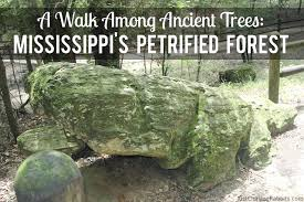 Mississippi forest images A walk among ancient trees mississippi 39 s petrified forest just png