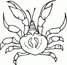 printable hermit crab coloring pages coloring me