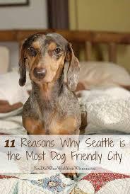 Washington traveling with pets images 38 best gopetfriendly washington images seattle jpg