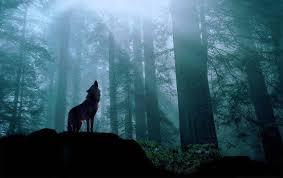 imagenes de fondo de pantalla lobos fondo pantalla lobo en bosque bosques pinterest fondo pantalla