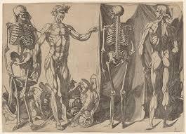 Anatomy Of The Human Skeleton Anatomy In The Renaissance Essay Heilbrunn Timeline Of Art