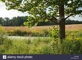 grassland native plants landscape of maple tree and algae covered pond on prairie of tall