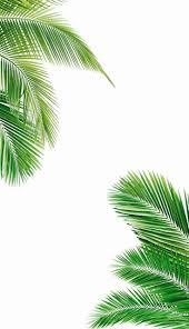 Palm Tree Wallpaper Best 25 Tropical Wallpaper Ideas On Pinterest Tropical