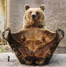 Meme Bear - oh look a bear doing something stupid lets make a meme out of it