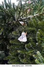 christmas tree recycling stock photos u0026 christmas tree recycling