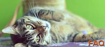 rad cat raw diet premium raw food for cats