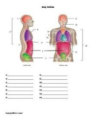 human anatomy labeling worksheets human body system labeling