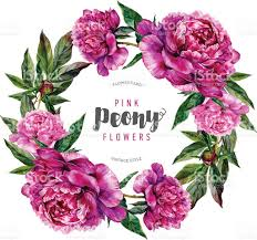 The Pink Peonies by Watercolor Floral Wreath Of Pink Peonies And Leaves Stock Vector