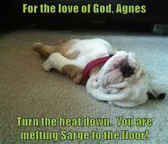 Melting Meme - i has a hotdog melting funny dog pictures dog memes puppy