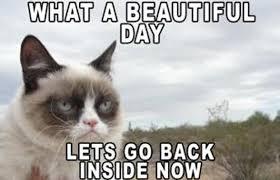 Meme Grumpy Cat - the 50 funniest grumpy cat memes funny grumpy cat memes grumpy