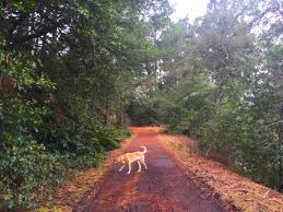 Tilden Park Map Tilden Regional Park Hikes Dogs Love