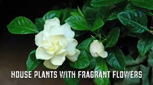 fragrant flowers for garden gardening ideas