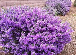best 25 flower landscape ideas on pinterest front house garden