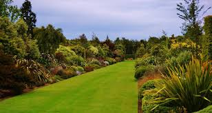 african native plants 100m long double borders of nz native plants broadfield nz