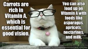 Stupid Cat Meme - 8 insanely smart facts presented by insanely stupid cat gifs from alex