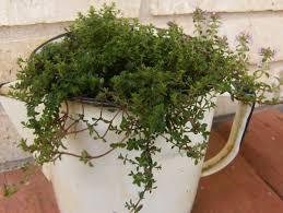 simple gardening 4 methods to get you growing