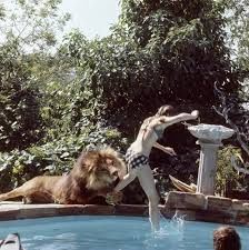 California wild swimming images Yes that 39 s just the pet lion in the swimming pool jpg
