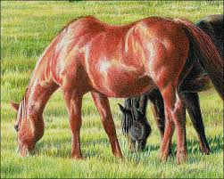 how to draw a realistic chestnut horse with colored pencils