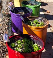 hgic 1251 container vegetable gardening extension clemson