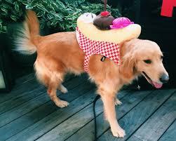 dog halloween costumes are the shih tzu huffpost